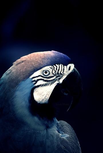 "Srta pepis - chasingrainbowsforever: "" Colors ~ Black, White and Blue "" ☆"