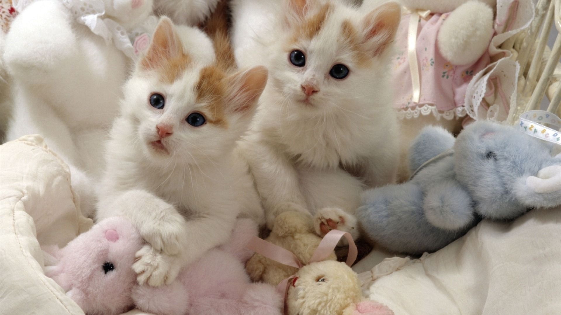 Download Wallpaper Pair Toys Kittens White Section Cats In Resolution 1920x1080