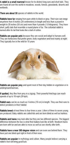 Rabbit Facts For Kids Rabbit Facts Facts For Kids Rabbit
