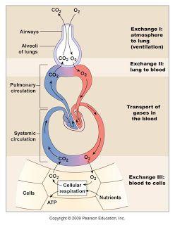 Kidney Fluid Balance - Kidney Failure Disease