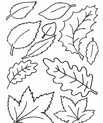Leaves..Can cut them out and have the kids color and then