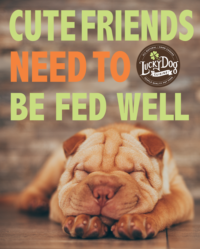 Cooked All Natural People Quality Food For Dogs Shipped Frozen Simply Thaw And Serve Dog Food Recipes Dog Food Delivery Food Animals