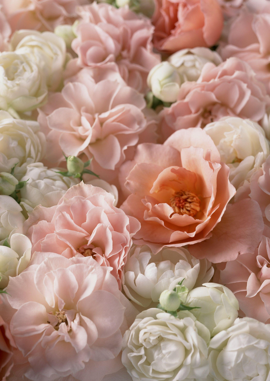 Bouquet Arranjo De Flores Acordo Decoracao Background Buque De