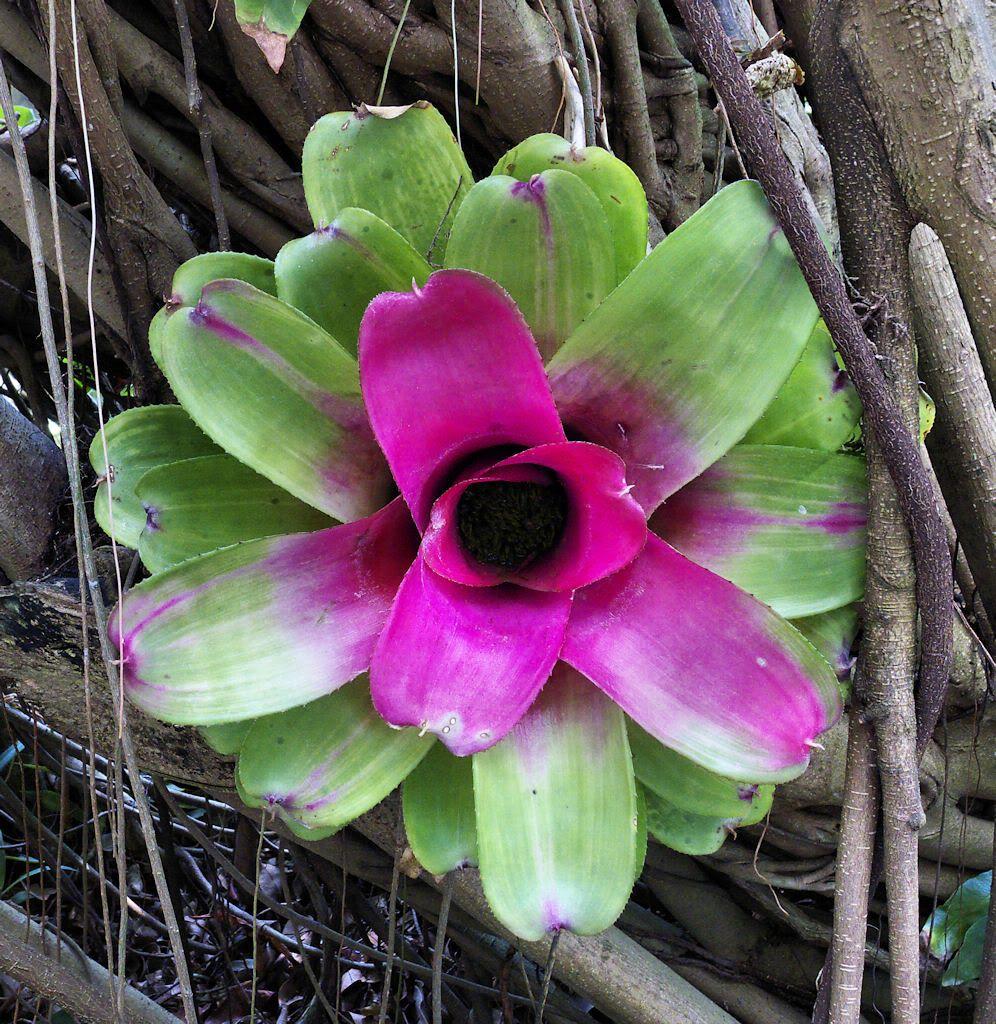 Rainforest Plants And Flowers | Rainforest plants, Plants ...