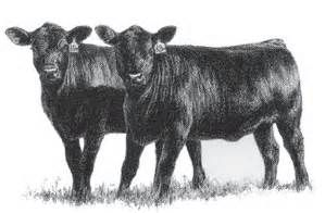Angus Cow Drawings Bing Images Cows Ponies Cow Art Cow Cow