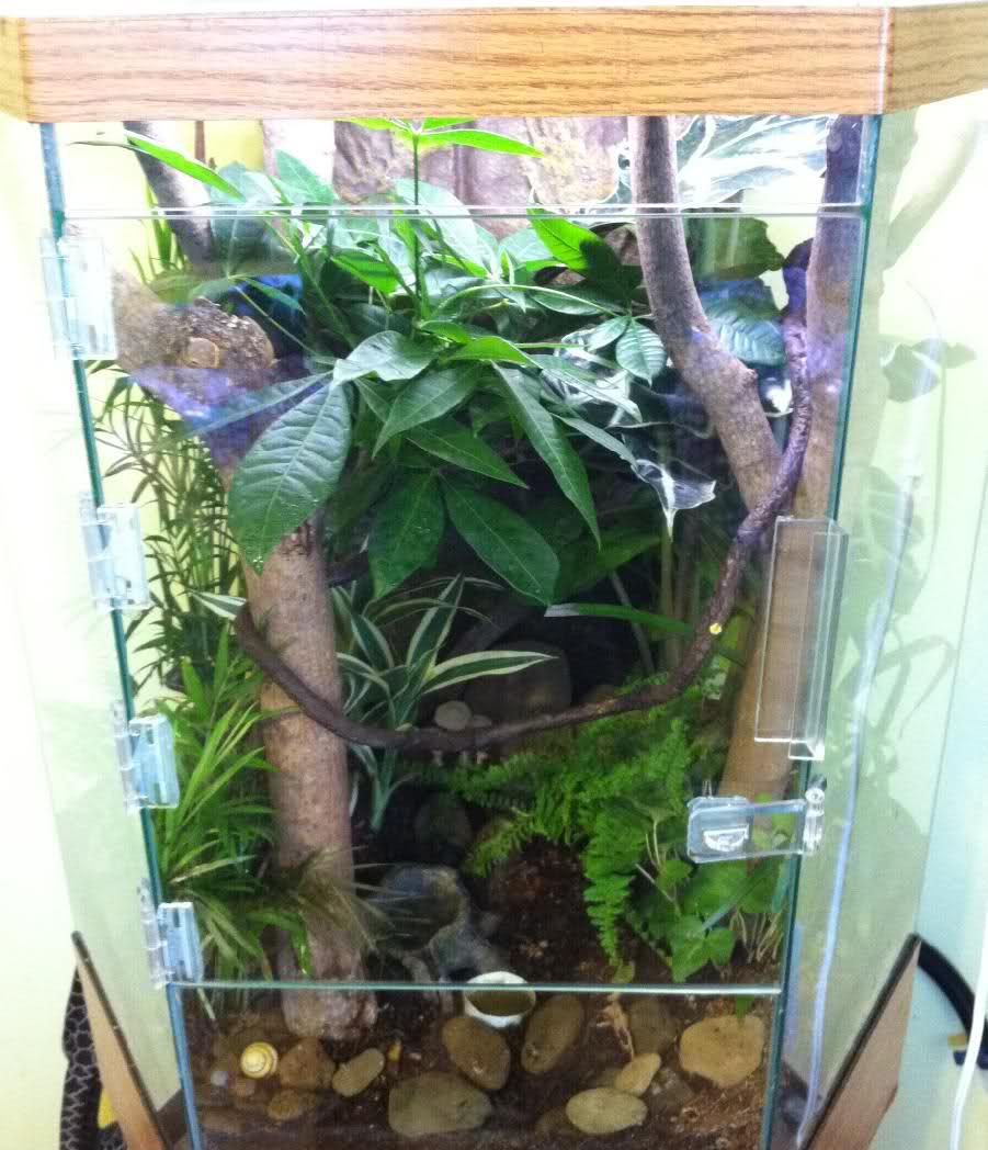 Planted hexagonal vivarium for crested gecko (lots of pics ...