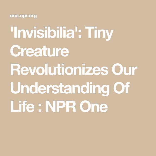 Invisibilia Tiny Creature Revolutionizes Our Understanding Of Life Npr One Understanding Life Creatures