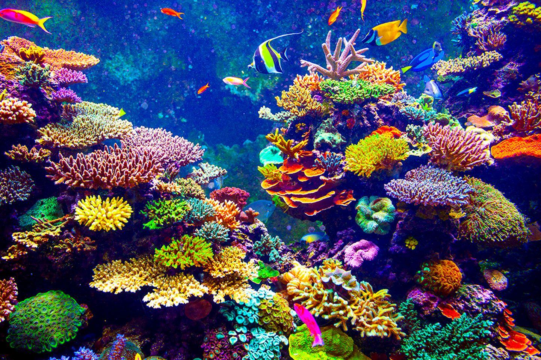 Certains Etres Vivants Ne Vieillissent Pas Decouvrez L Immortalite Biologique Fond Marin Poisson Tropical Poisson Image