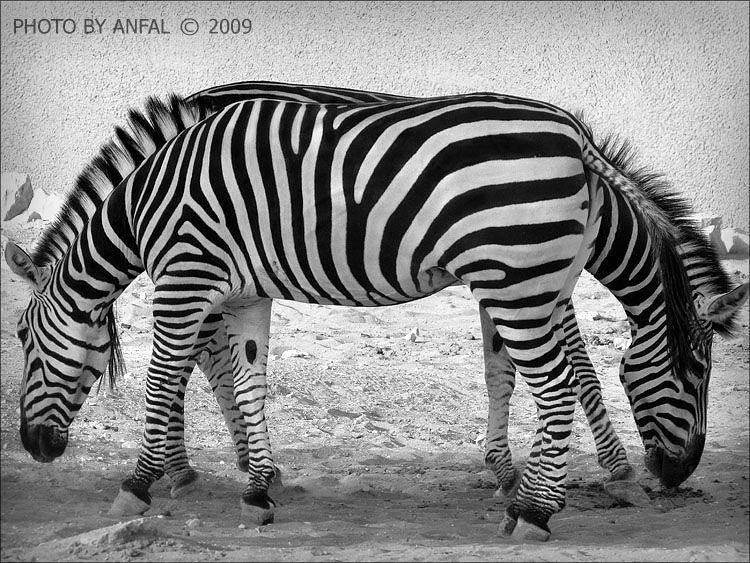 65 Amazing Optical Illusion Pictures | The Design Work