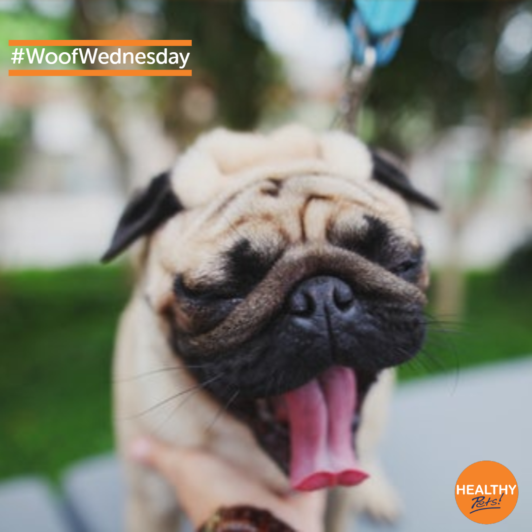 When That Wednesday Mood Hits Mood Woofwednesday Dogs