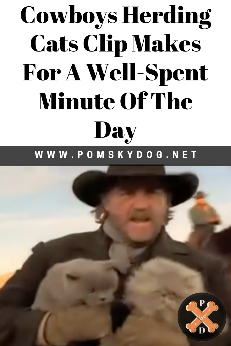 Cowboys Herding Cats Clip Makes For A WellSpent Minute Of