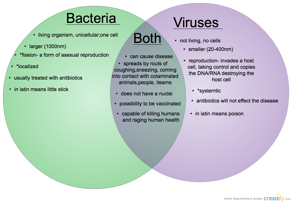 bacteria and viruses Bacteria are single-celled organisms that are alive, and can live inside the human body and are larger than viruses viruses on the other hand are particles made of dna or rna, a protein coat, and.