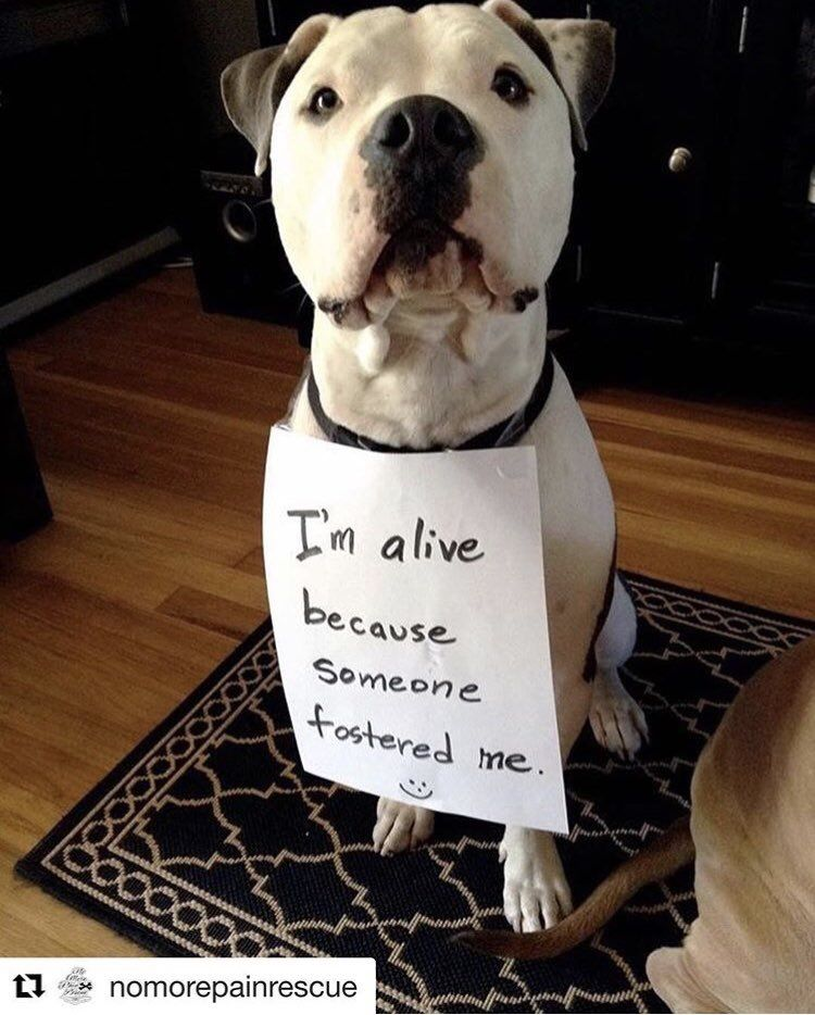 Fosters Urgently Needed From Inhumane Shelters Dogs Rescue Dogs Pitbulls