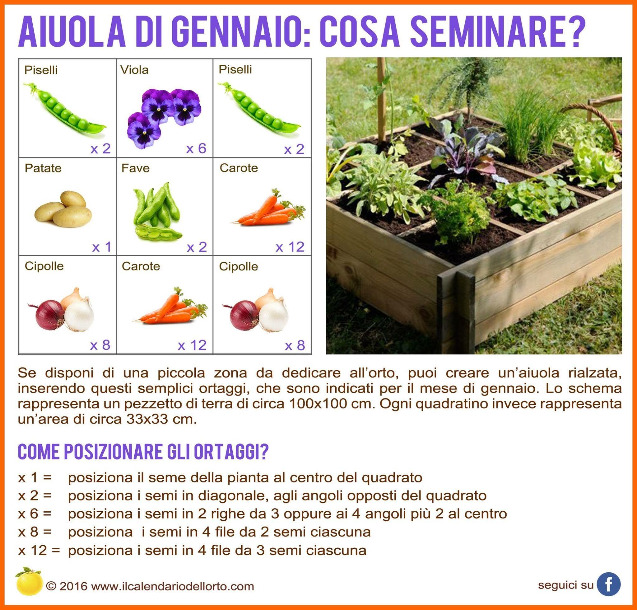 Cosa Seminare A Gennaio pin di chiara alocci su garden (con immagini) | orto, aiuole