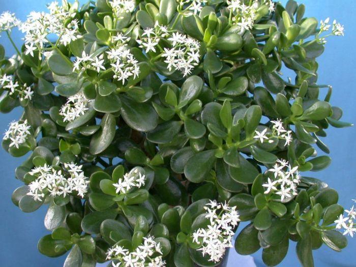 zimmerpflanzen die gl ck bringen g rtnern pinterest pflegeleichte zimmerpflanzen. Black Bedroom Furniture Sets. Home Design Ideas