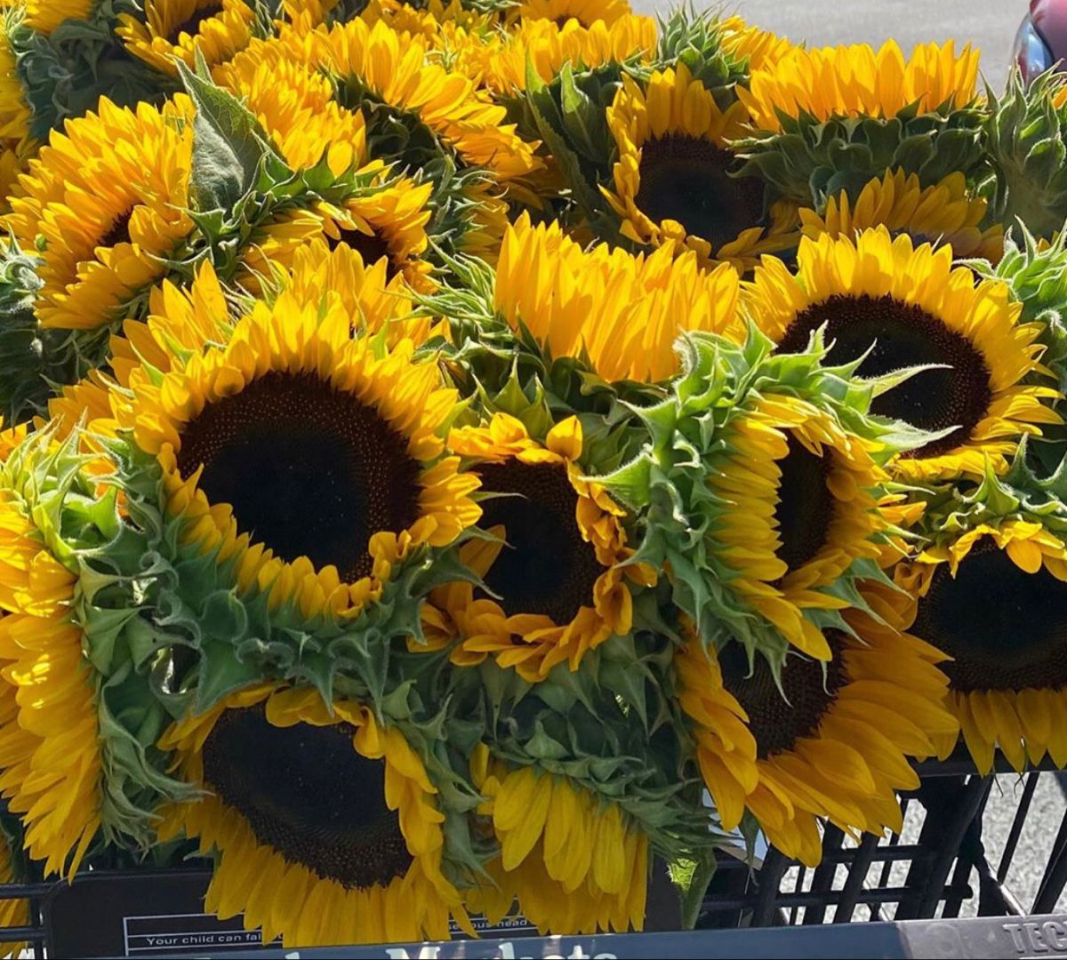 Sunflowers In 2020 Sunflower Delivery Wholesale Flowers Wedding Red Sunflowers