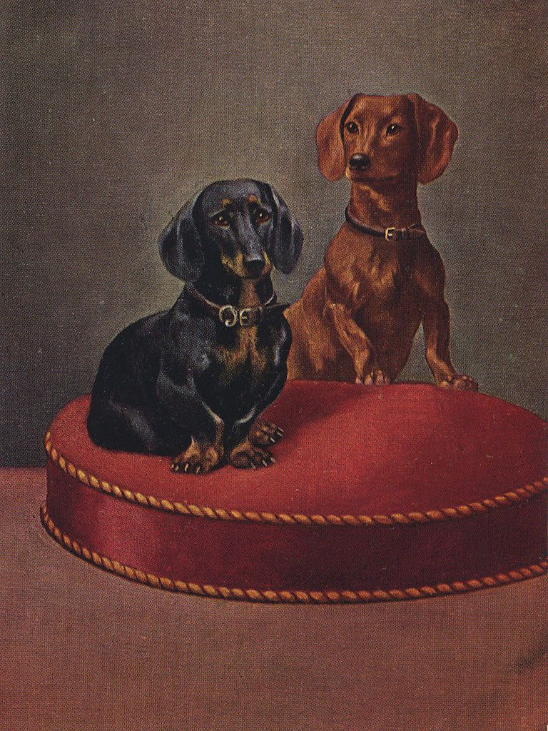 DACHSHUND CHARMING WIRE HAIRED DOG GREETINGS NOTE CARD BEAUTIFUL SITTING DOG