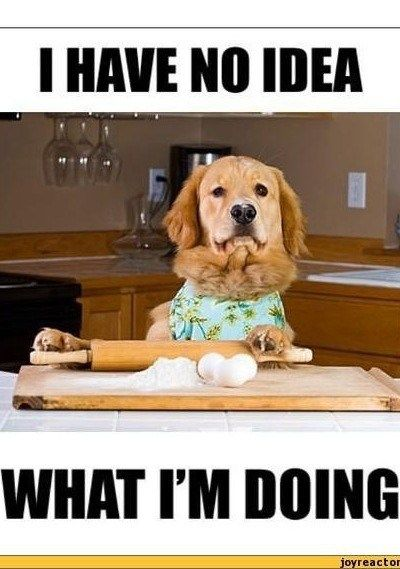 Mama S Gluten Free Tips Best Funny Pictures Funny Pictures Super Cute Animals