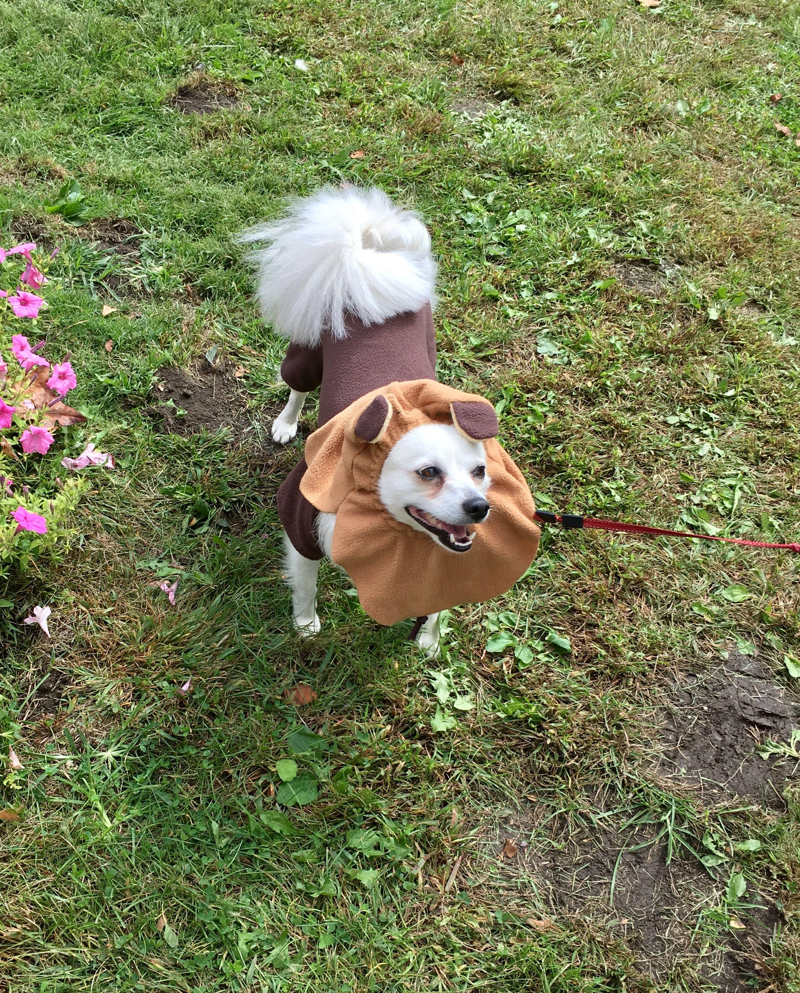 Freya in a costume contest as an Ewok.