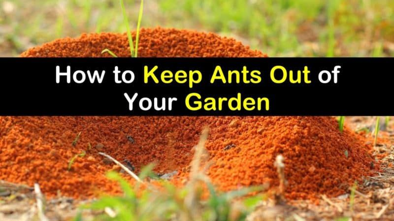 8 Effective Ways to Keep Ants Out of Your Garden in 2020