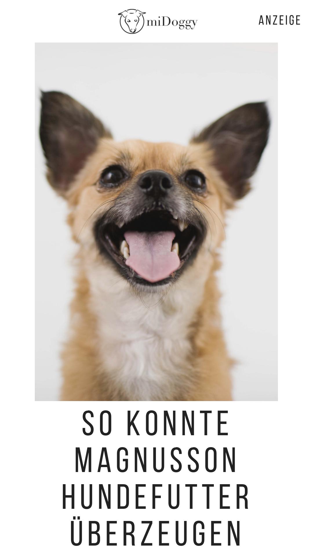 Lilla Hat Magnusson Organic Getestet Werbung Hunde