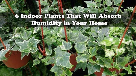 Attractive 6 House Plants That Reduce Humidity Levels
