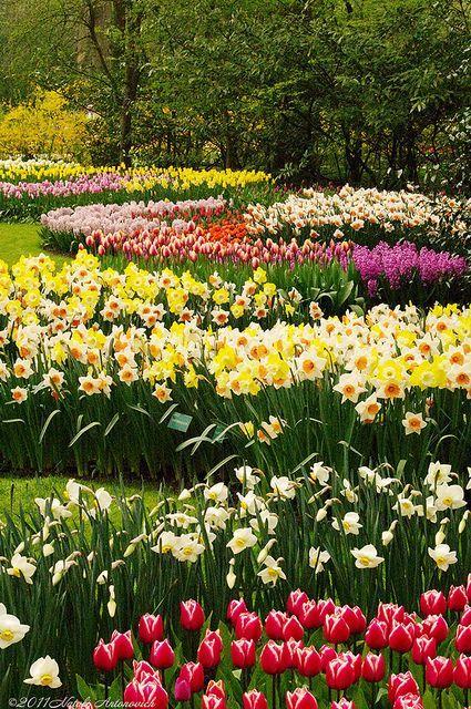 Keukenhof Holland Blumen Fur Garten Schoner Blumengarten Garten Pflanzen