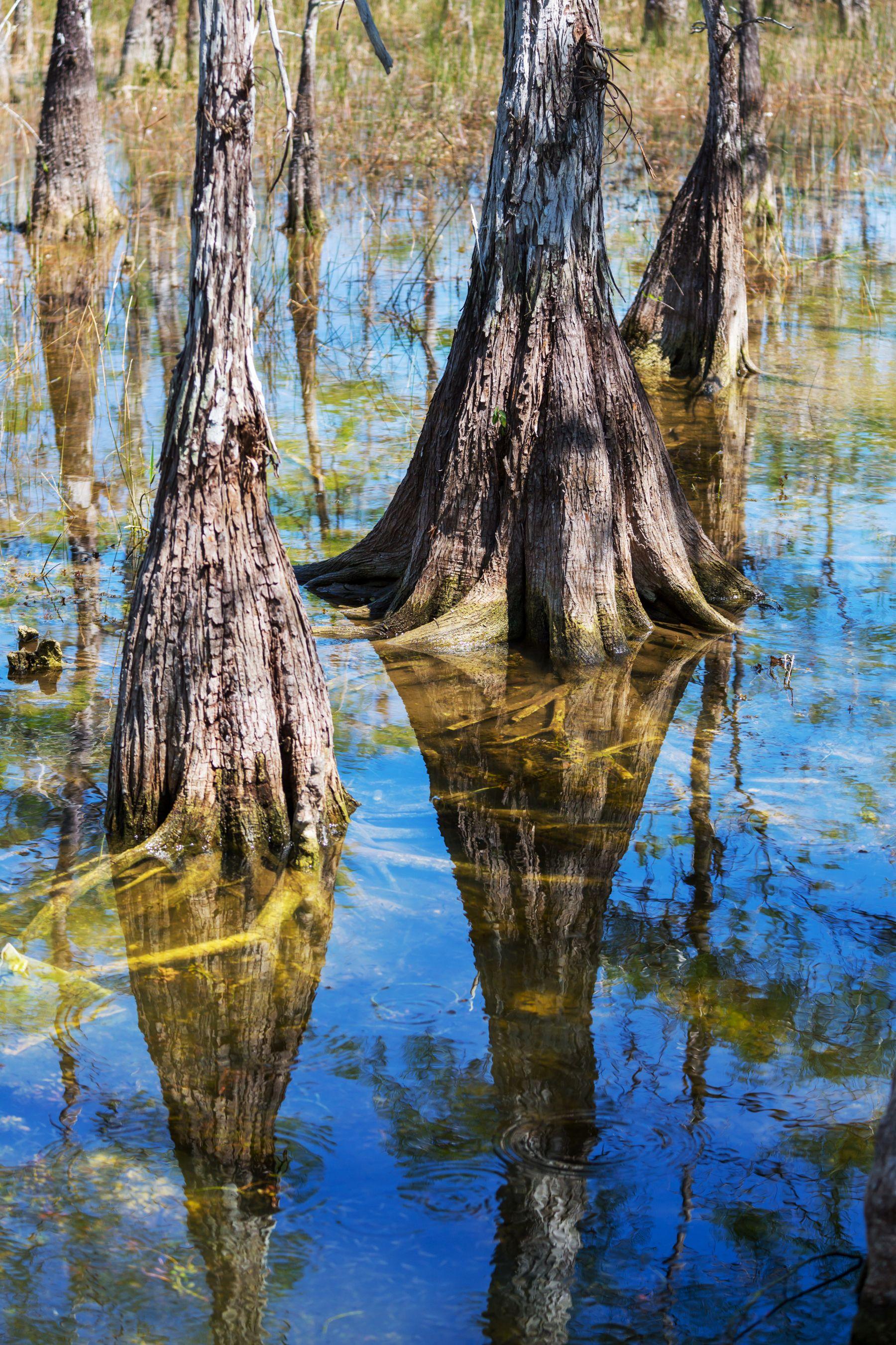 Cruisin' Through the Bayou Bayou country, Places to go