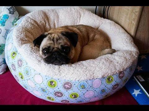 n hanleitung hundebett hundekissen diy selber n hen hund. Black Bedroom Furniture Sets. Home Design Ideas