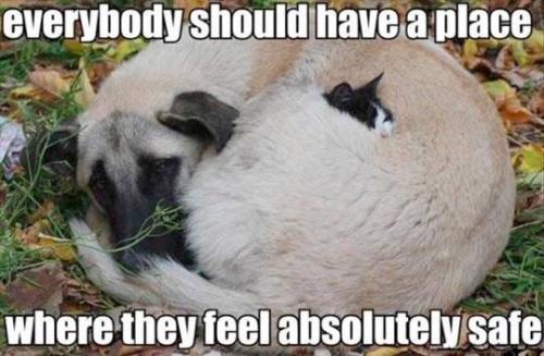 Funny Memes For Kids Animals : Safe place meme slapcaption.com misc. funny sad excited cute