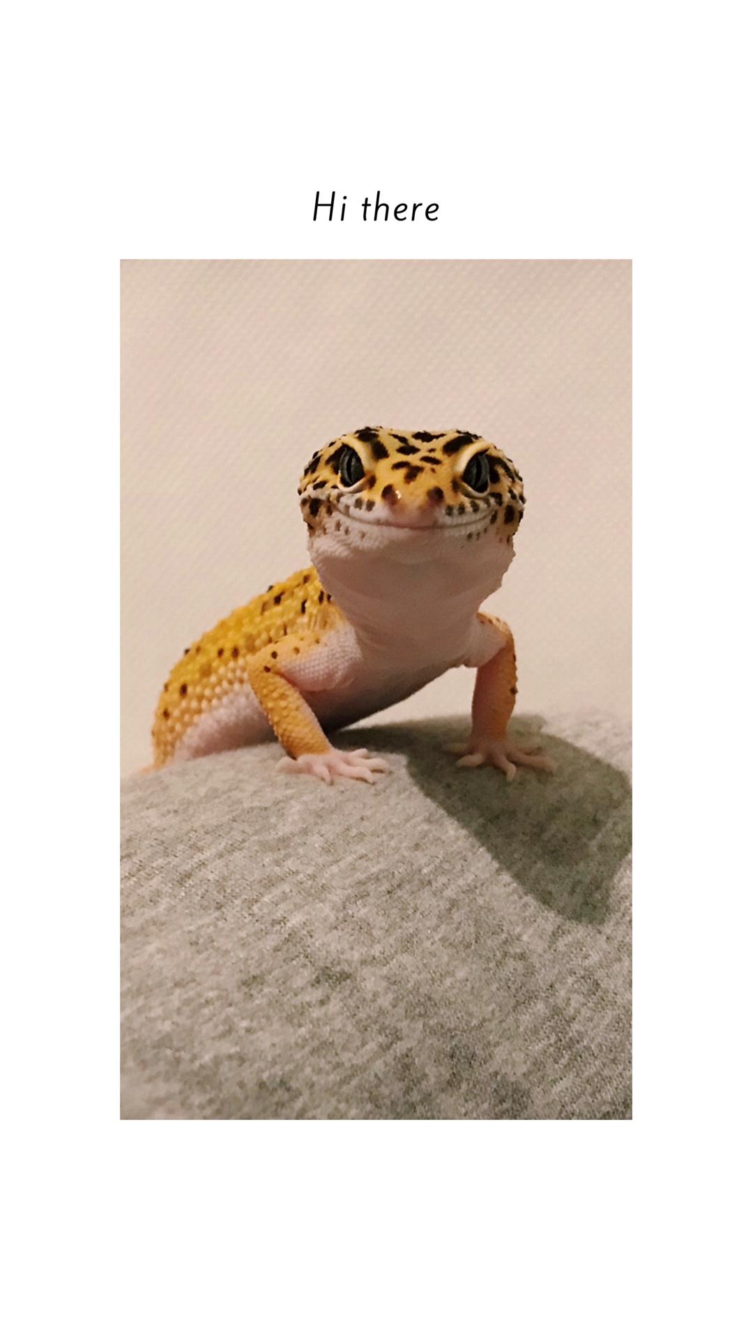 Always Smiling Cute Reptiles Leopard Gecko Cute Leopard Gecko