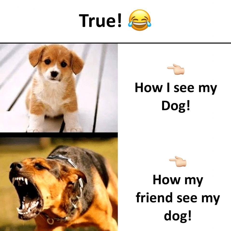 Funny Dog Memes Funny Dog Memes Memes Sarcastic Funny Animal Memes