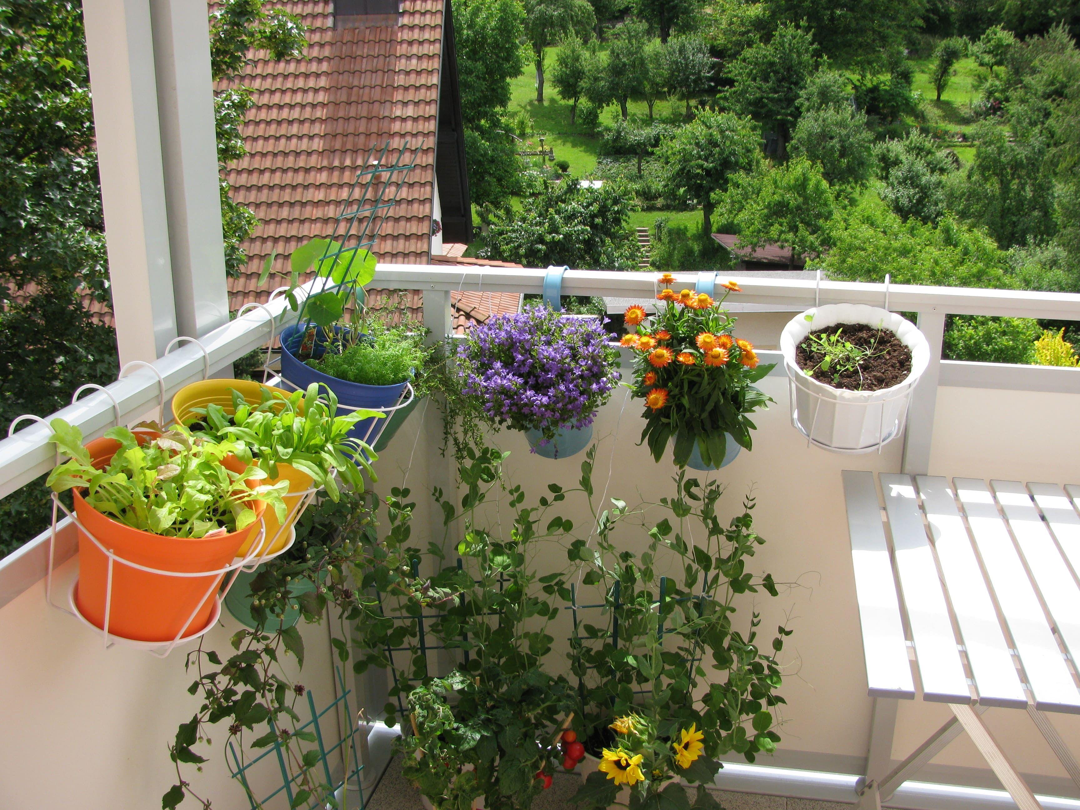 Jardiner en ville en toute simplicité