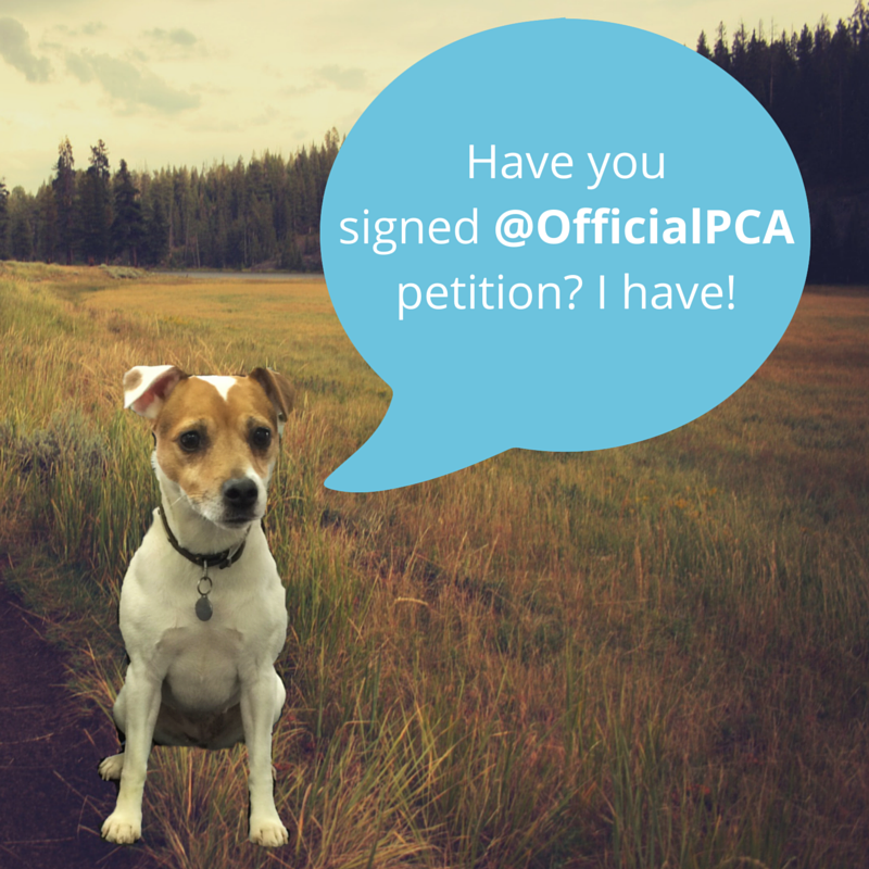 Only  Days To Go Officialpca Please Sign And Share Love Spot