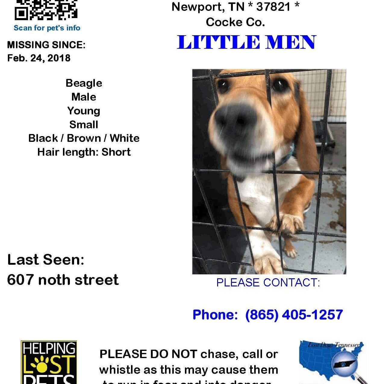 My Missing Male Beagle Dog Please Share Get Him Back Home Beagle