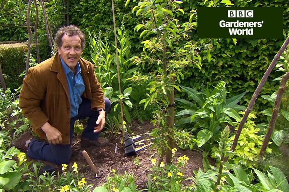 Monty Don S Giant Sunflower Trial Part Two In 2020 Giant Sunflower Monty Don Planting Sunflowers
