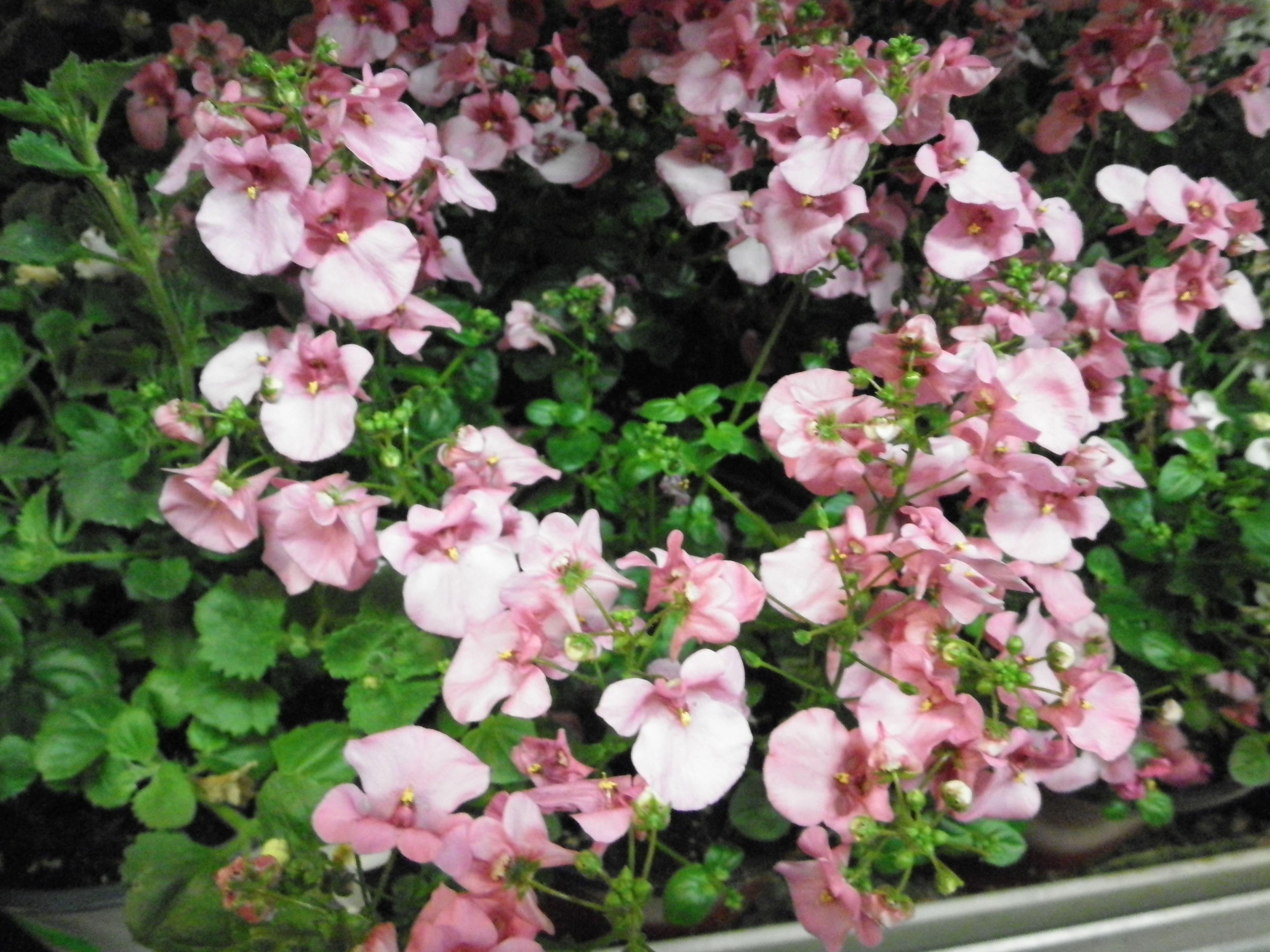 Pflanzen Fur Beet Und Balkon Blumen Und Pflanzen Pinterest