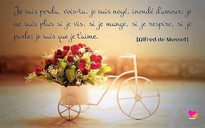 Les Plus Belles Phrases Damour Phrase Amour Citations