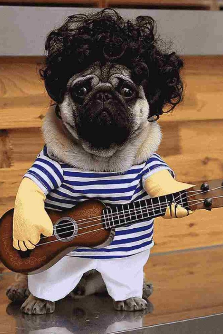 Do Not Put Too Much Efforts When Your Dog Can Rock The Party Check