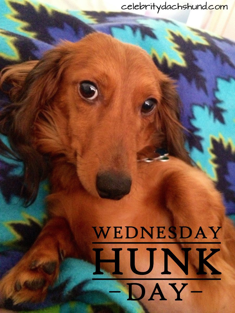 Todayus wednesday hunk is gus from west des moines iowa sunday