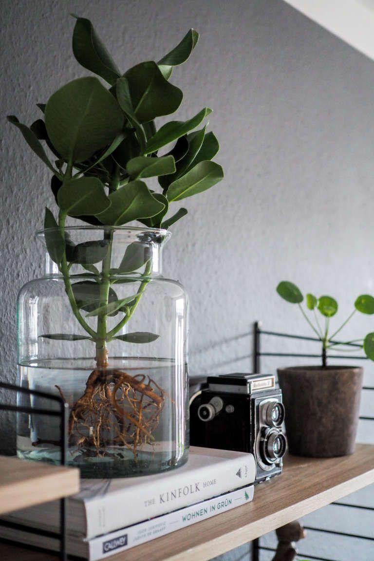 water plants der neue pflanzentrend pflegeleichte zimmerpflanzen pflanze im glas und
