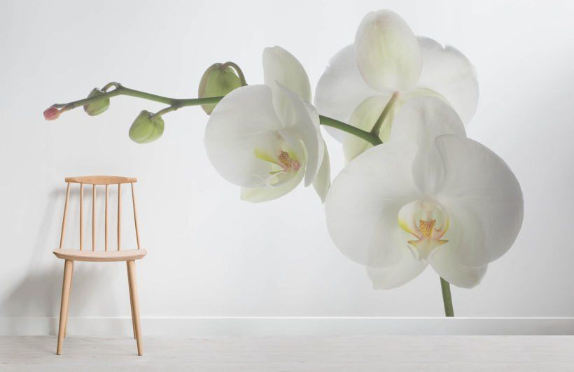 White Orchid Flower Room Large Floral Wallpaper Orchid Wallpaper Flower Room