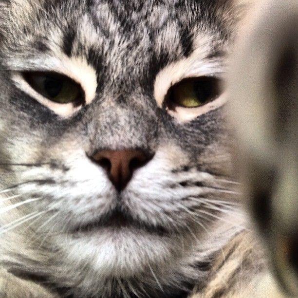 Selfie by Don Corleone.  IG + TW: @clickmiau