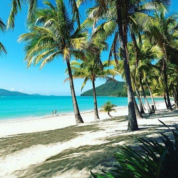 Where we'd rather be today. Image of Hamilton Island Queensland by @emiejane88 #island #beach #tropical #queensland #hamiltonisland #vacation #holiday #travel #luxurytravel #luxuryvacation #australia #queensland by splendour_tt http://www.australiaunwrapped.com/ #AustraliaUnwrapped