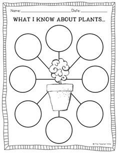 worksheet on types of plants for grade 2 google search school worsheets teaching plants. Black Bedroom Furniture Sets. Home Design Ideas