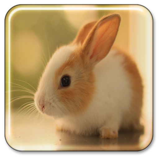 Beautify your phone or tablet with cute animal wallpapers