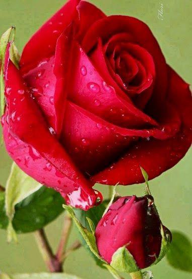 Rózsa V. - Comunidade - Google+