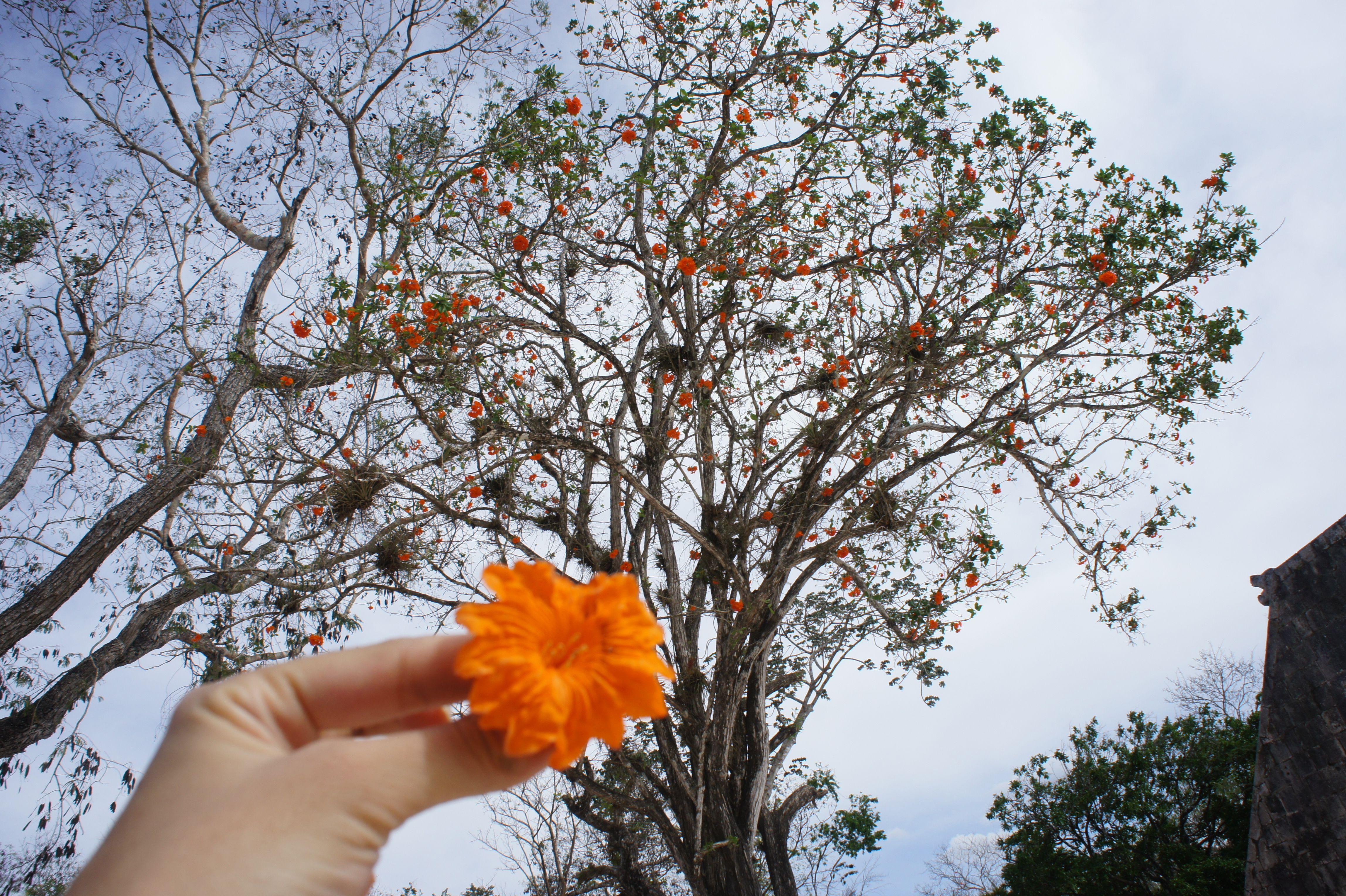 Chichen Itza Tree