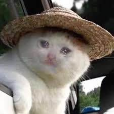 Pin On Sad Cats