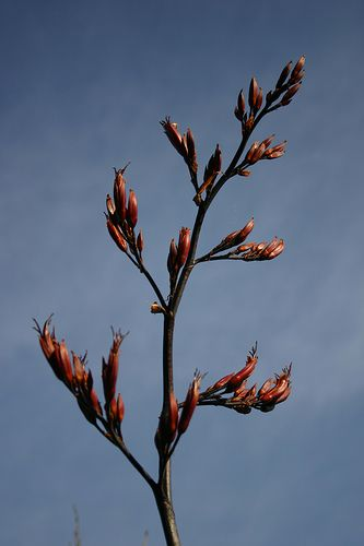 Nz Flax Flower Flax Flowers Art Inspiration Kiwiana